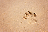 pawprint on beach