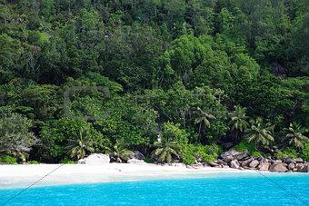 beach of silhouette