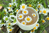 Herbal tea of chamomile flowers