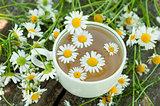 Herbal tea of chamomile flowers