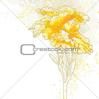 Canna flower on white background