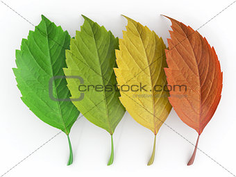 Four season.  Green, red and yellow leaf