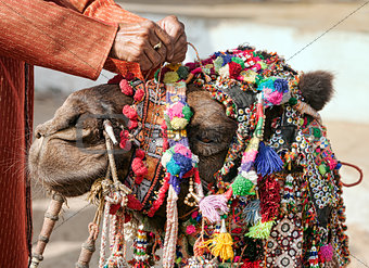 Decoration camel at the Pushkar Fair