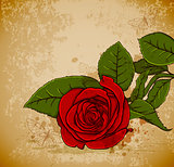 Vintage red rose