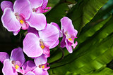 pink orchid flowers tropical garden