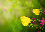 summer butterfly with flowers during sunrise with copyspace