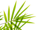 Photo of Bamboo leaves isolated on white background