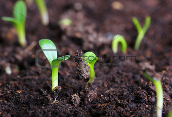 small green seedling