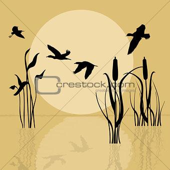 Flying birds over lake at sunset