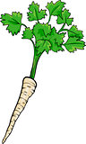 parsley root vegetable cartoon illustration