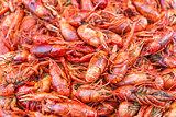big prawns in market