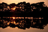 Setting sun glows through trees and reflected in still lake wate
