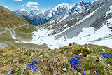 Summer Stelvio Pass (Italy) and blue flowers in front.