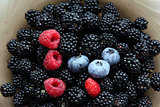 Fresh blackberries, raspberries, blueberries and one wild strawb