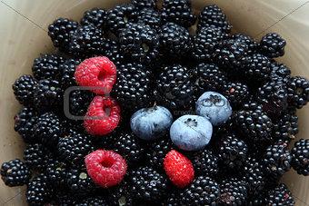 Fresh blackberries, raspberries, blueberries and one wild strawb