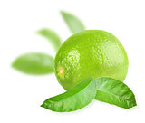 Full fresh lime