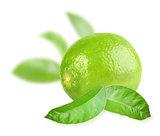 Full fresh lime