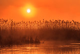 sunrise among reeds