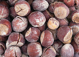Hazel nut brown background