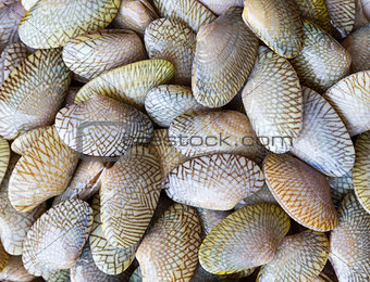 Raw Carpet clam