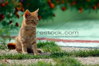 Small feline