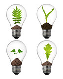 alternative energy concept: variety of light bulbs with plant inside