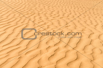 Gold dunes in great indian desert