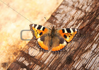 Butterfly on a wooden plank