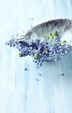 Grape Hyacinths