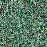 Seamless Texture of Sage-Brush.