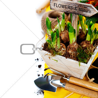 Spring flowers and garden tools