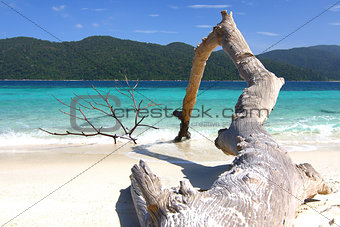 A beautifil beach with old log on LIPE island.