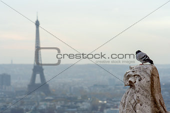 Bird with Eiffel tower on background