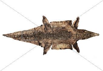 Old Alligator Skin
