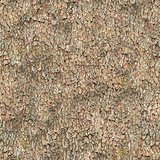 Seamless Texture. Bark.