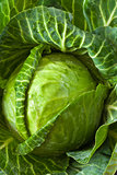 Fresh cabbage.