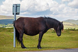 Horse humor - cross pony scratches ass on signpost.