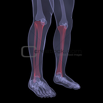 X-ray of human legs