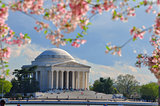 Jefferson memorial in cherry bloom