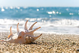 seashell on the sand of seashore