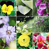 Flowers and Plants Collage