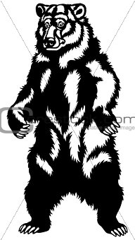 grizzly bear black white