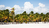 Cap cana beach scape