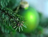 Green Christmas ball on branch