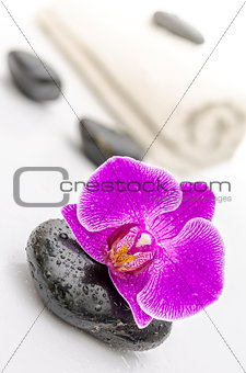 Violet orchid flower on a spa stone