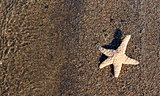 Starfish on wet beach sand