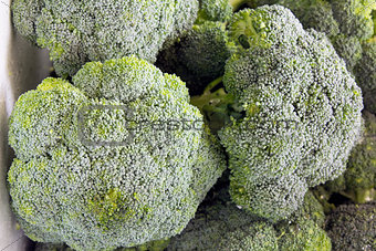 Broccoli Green Vegetables
