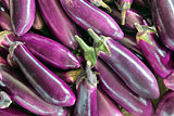Eggplant Vegetable Background