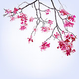 Spring Blooming Sakura branch