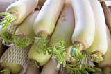 Daikon White Radish Closeup